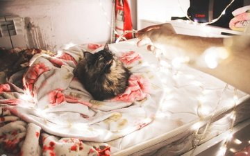 light, new year, neon, cat, bed, blanket, holiday, celebration, garland
