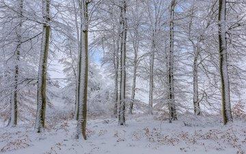 деревья, снег, лес, зима