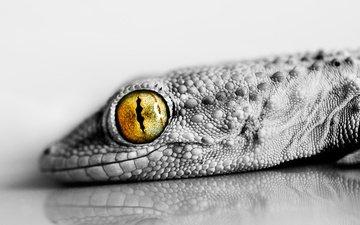 ящерица, глаз, рептилия, взор, пресмыкающееся, ящер