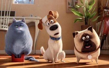 кот, комната, макс, взляд, мел, cобака, животно е, хлоя, из мультфильма, тайная жизнь домашних животных