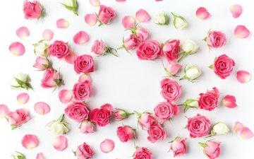 бутоны, розы, романтик, цветы, роз, пинк, valentine`s day