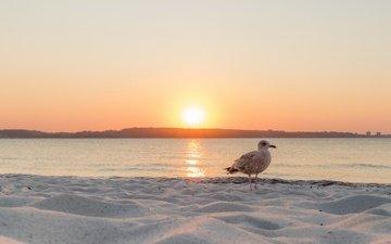 закат, море, чайка, птица