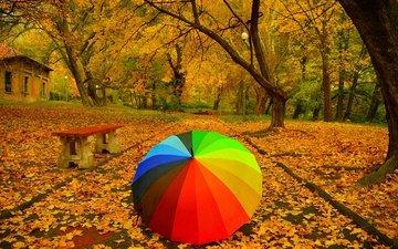 деревья, парк, дорожка, листва, осень, тропинка, зонт, скамья, зонтик, листопад, расцветка, деревь, опадают, осен, листья