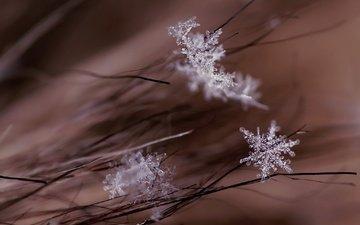 макро, снежинки, фон