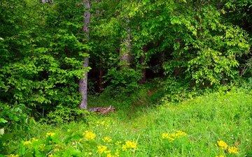 трава, зелень, лес, весна, весенние, грин