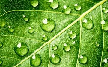 вода, зелёный, узор, капли, лист, грин, leave