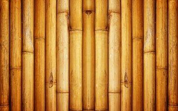 texture, pattern, wall, bamboo