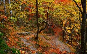 деревья, лес, листва, осень, тропинка, расцветка, деревь, опадают, осен, листья