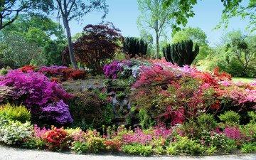 природа, кусты, великобритания, рододендрон, сады