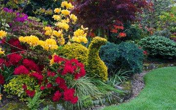 природа, дизайн, кусты, англия, парки, рододендрон, walsall garden