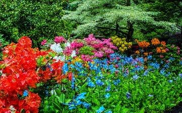 природа, канада, сады бутчартов, рододендрон, сады
