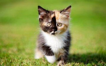 grass, cat, kitty, cats, kittens