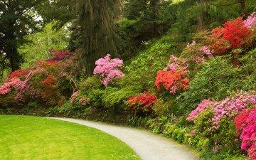 трава, природа, кусты, великобритания, тропа, рододендрон, сады
