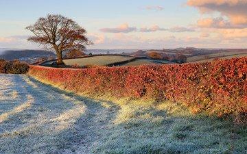природа, дерево, поля, иней, забор, газон, поздняя осень