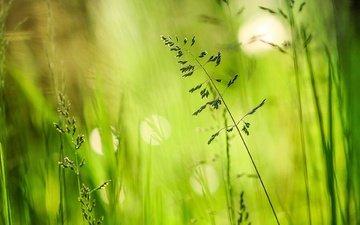 трава, зелень, лето, блики