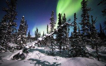 деревья, снег, лес, зима, северное сияние, ели, аляска, национальный парк денали