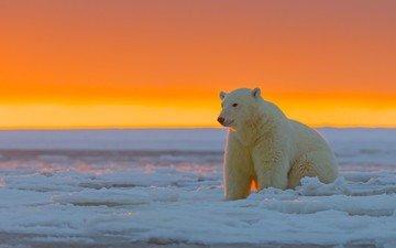 закат, лёд, белый медведь, аляска