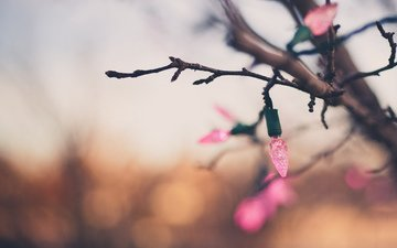 branch, new year, background, holiday, garland