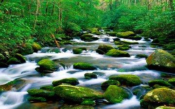 река, природа, камни, лес, зелёный, мох, горная, растительность