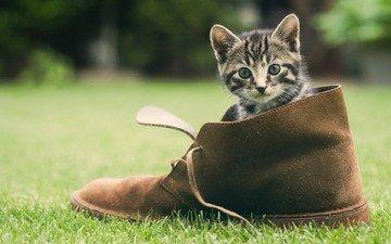 трава, зелень, кошка, котенок, мордашка, обувь, башмак