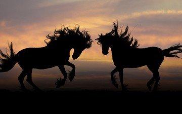 природа, силуэт, лошади, кони