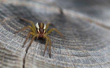 животные, насекомые, паук, пень, крупным планом