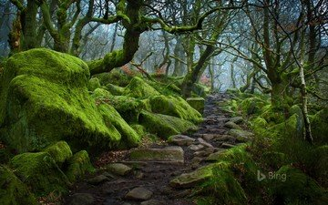 trees, nature, forest, path, moss, bing