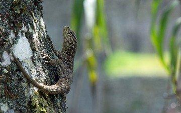 природа, дерево, ящерица