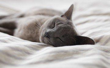 кот, кошка, сон, постель