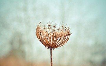 природа, макро, семена, растение