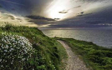 цветы, трава, природа, берег, море, тропа