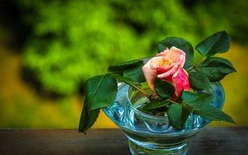 цветы, листья, цветок, роза, бутон, ваза, вазочка