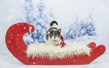 зима, кот, кошка, взгляд, сани, фотосессия, шарфик
