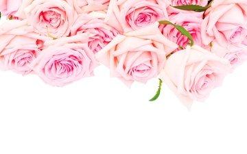 розы, романтик, цветы, розовые розы, роз, влюбленная, пинк