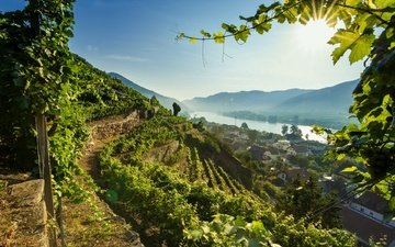 река, австрия, долина, дунай, вахау