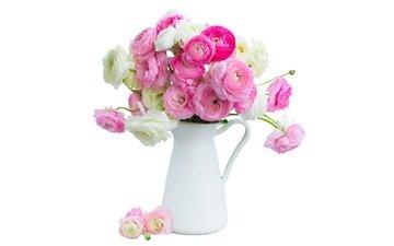 цветы, розовые, белая, красива, цветы, ранункулюс, лютики, пинк