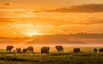 свет, горы, африка, слоны
