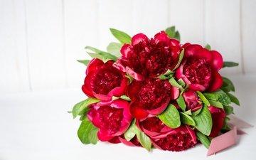 цветы, красный, букет, пионы