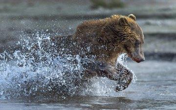 water, bear, squirt, running