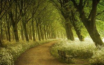 свет, деревья, лес, дорожка, лето, тропинка, весна, фотограф, лавка, амстердам, lars van de goor