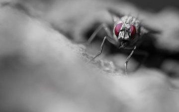 макро, насекомое, фон, муха