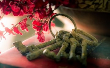flowers, background, key, keys