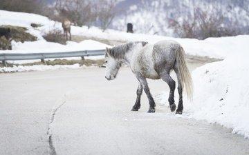 дорога, лошадь, снег, зима, фон, лошади, конь