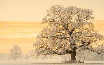 свет, снег, природа, дерево, зима, утро, фотограф, дымка, германия, дуб, lars van de goor