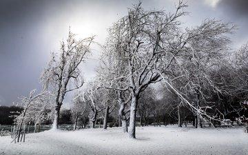 деревья, снег, зима, чёрно-белое, ниагарский водопад, нью - йорк, south end