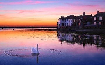 озеро, закат, птица, здание, лебедь