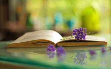 flowers, branch, macro, reflection, book, bokeh