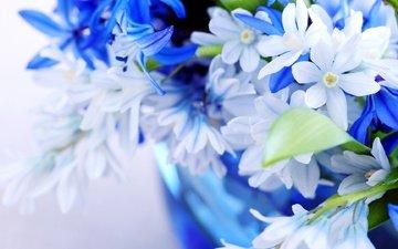 цветы, листья, синий, лепестки, цвет, голубой, букет, голубая, листки, цветы, нежно