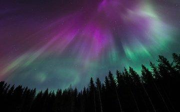небо, ночь, деревья, лес, звезды, северное сияние