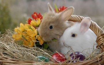 цветы, животные, корзина, кролики, пасха, яйца, солома, крашенки